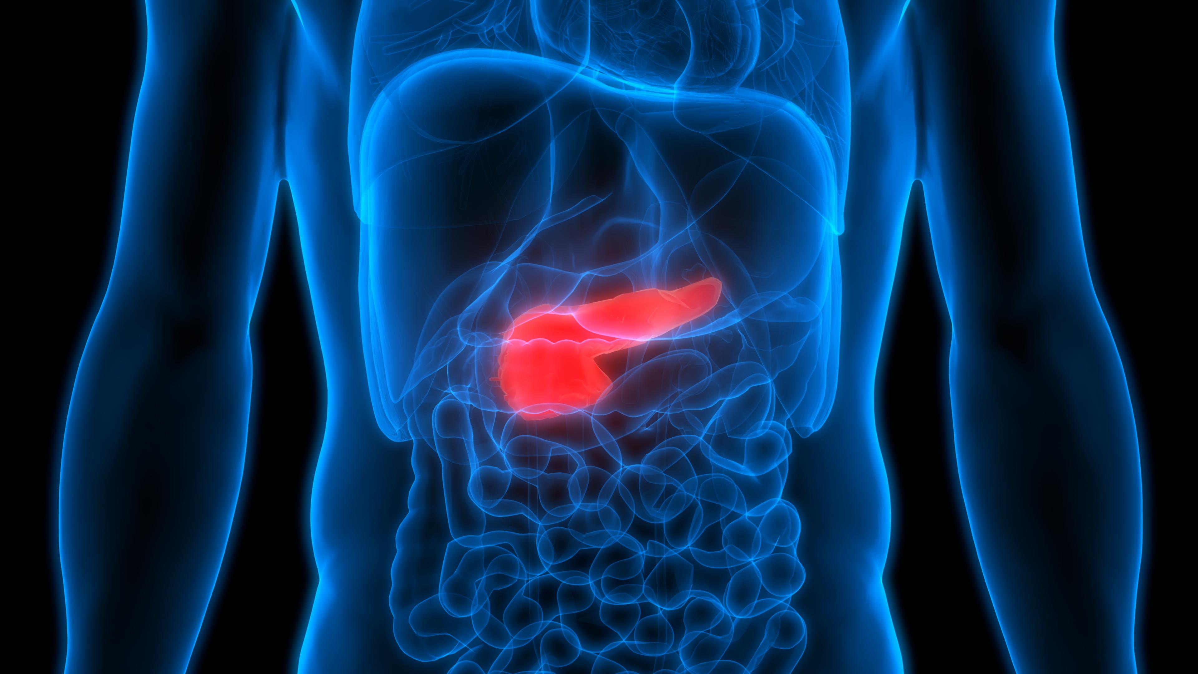 3D Illustration of Human Body Organs Anatomy (Pancreas)