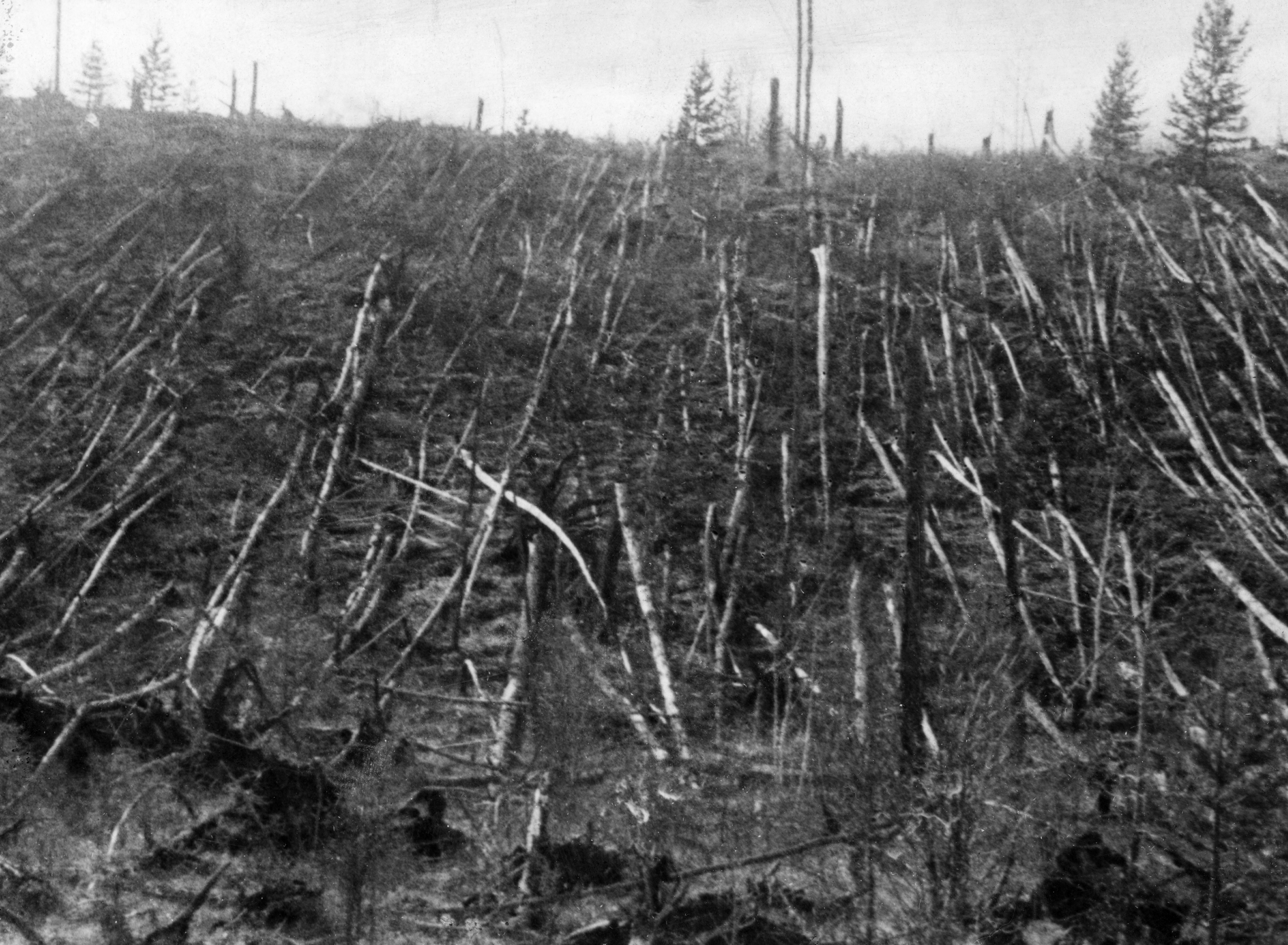 Siberian taiga forest that was flattened by the blast from the tunguska meteorite near where the meteorite fell in 1908, this picture was taken during professor leonid kulik's 1938 expedition to investigate the event. (Photo by: Sovfoto/Universal Images Group via Getty Images)