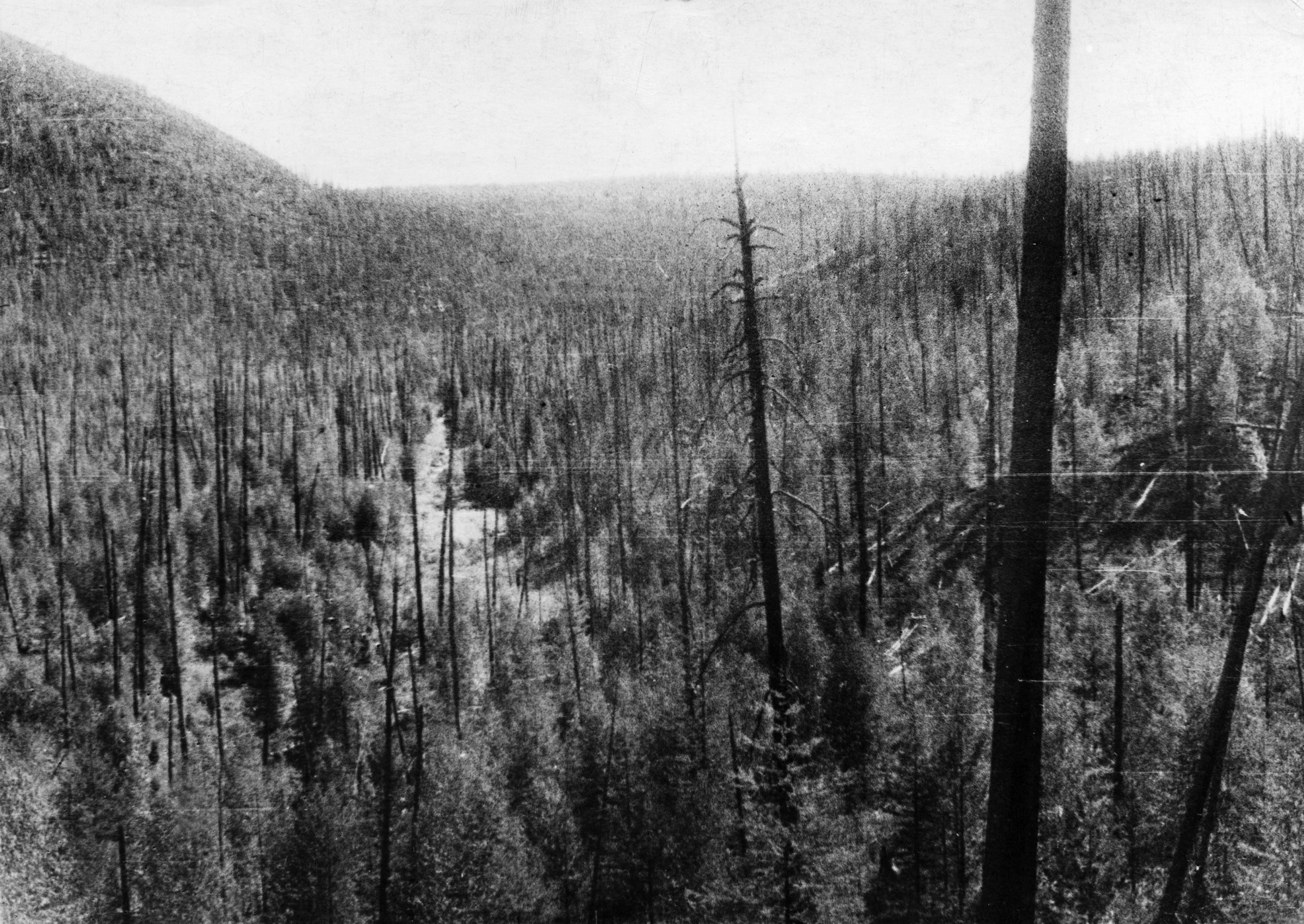 Tunguska meteorite, the valley of the churgima stream, 4km south of where the meteorite fell in 1908, the hills are covered with fallen and burnt trees and young growth, this picture was taken during professor leonid kulik's 1938 expedition to investigate the event. (Photo by: Sovfoto/Universal Images Group via Getty Images)
