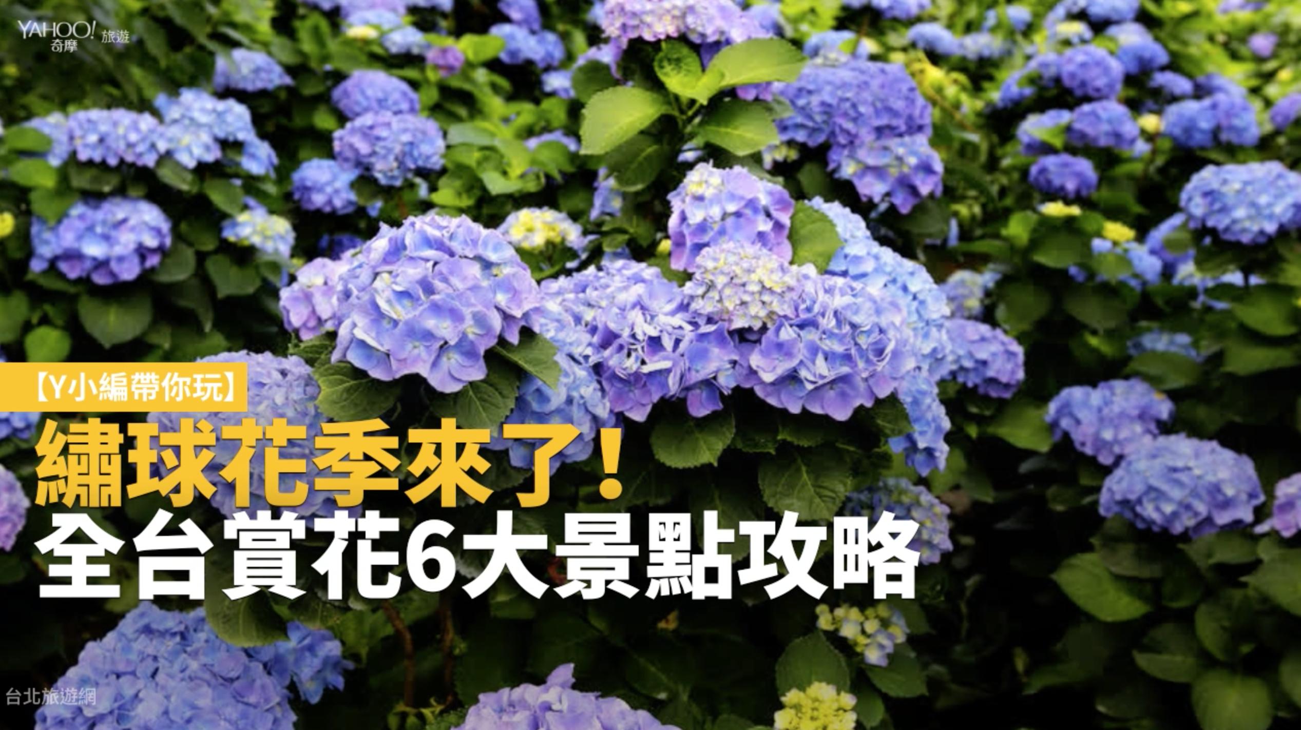 【Y小編帶你玩】繡球花季來了!全台賞花6大景點攻略報你知
