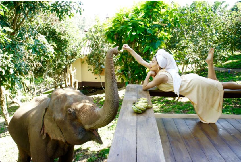 在Chai Lai Orchid和大象一起悠閒地生活(Photo Credit: The Chai Lai orchid)