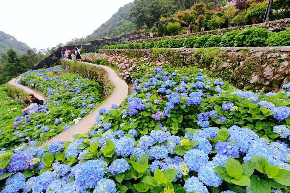 (圖片來源:大梯田花卉生態農園FB)