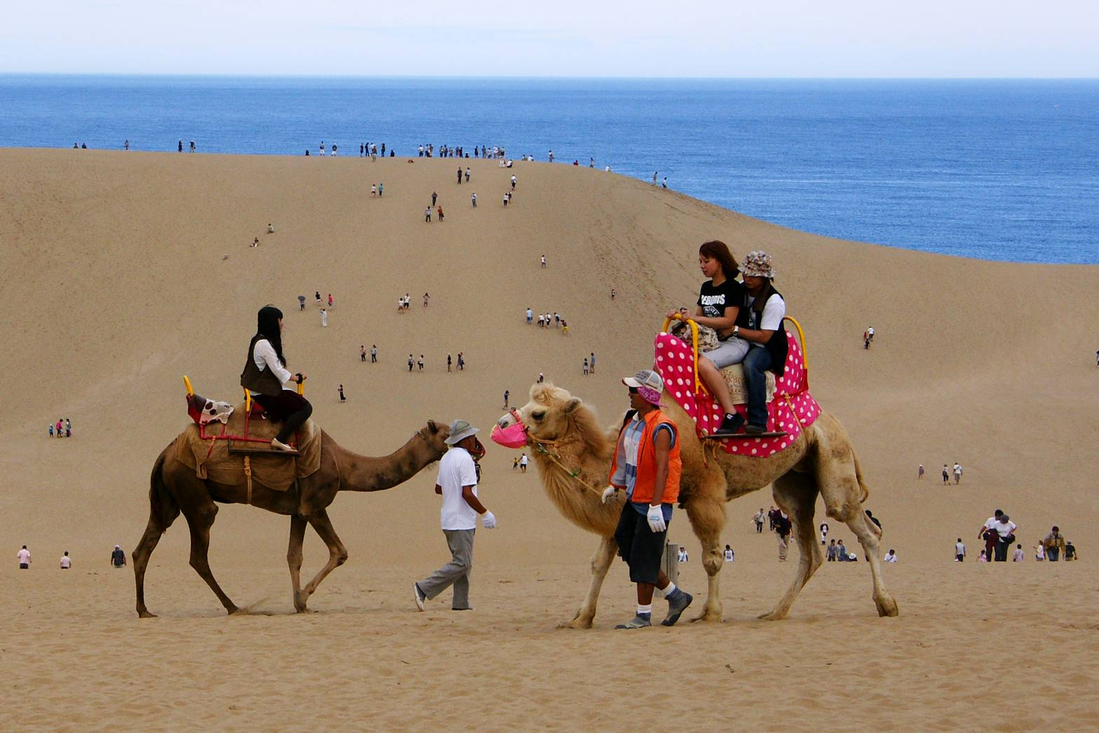 鳥取砂丘是日本最大的砂丘(圖/華信航空)