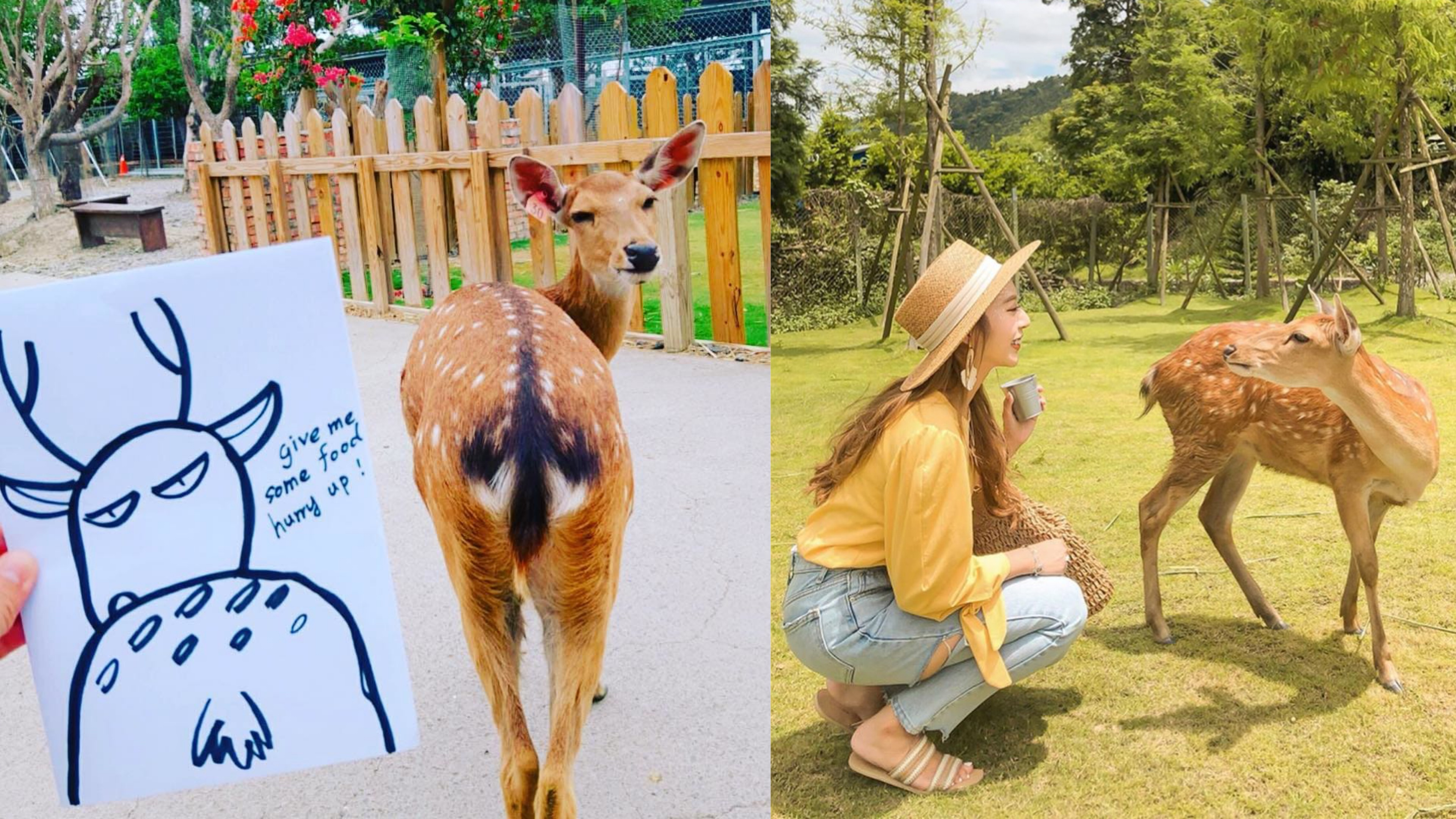 不用飛奈良 台灣就有小鹿斑比!宜蘭斑比山丘、馬祖大坵島、恆春鹿境