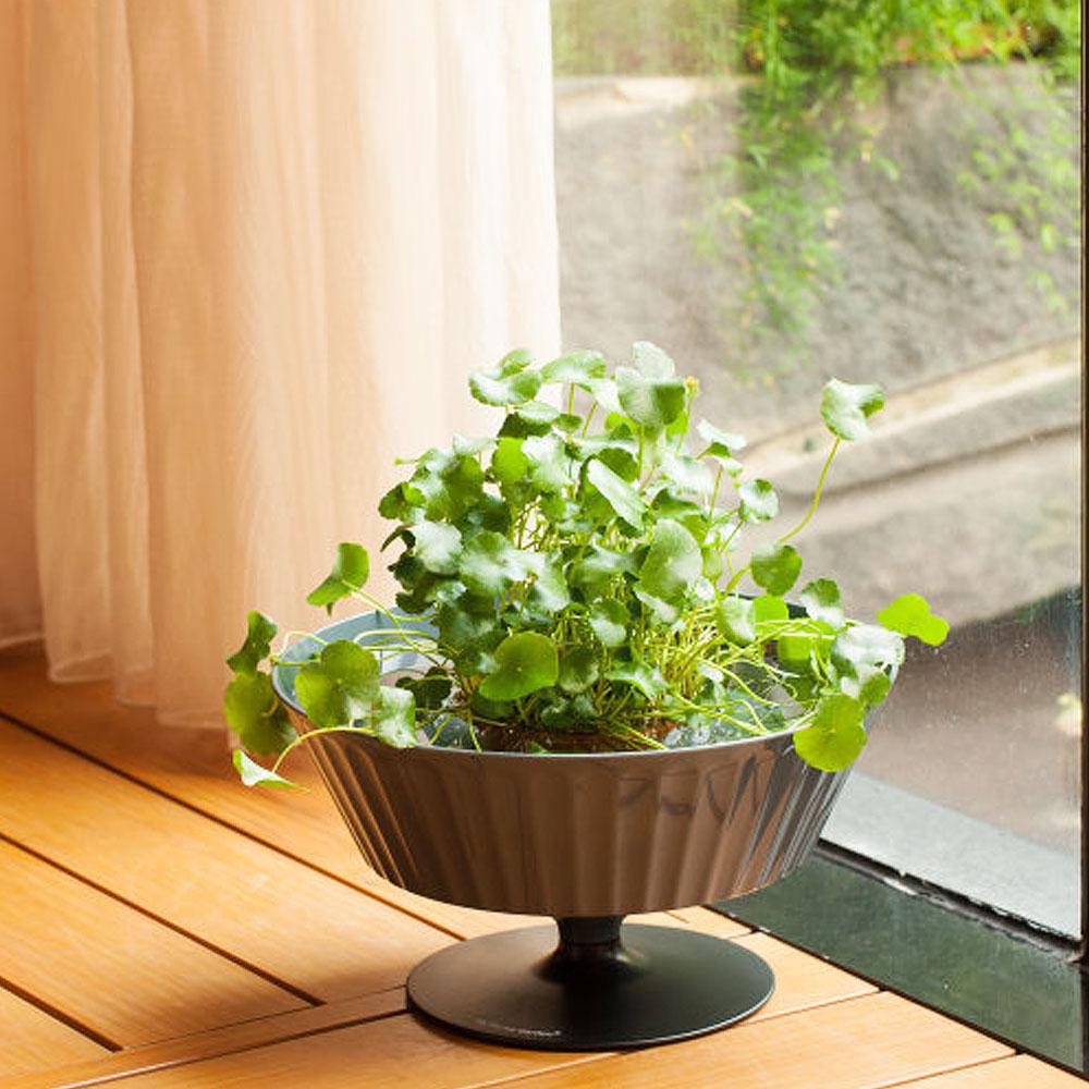 ▲魚花共生的室內植物,也是不錯的降室溫好物。(圖片來源:Yahoo購物中心)
