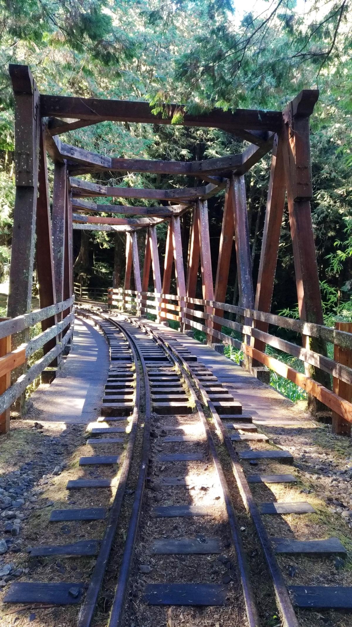 (陽光灑落水山步道 圖片來源:阿里山林業鐵路及文化資產管理處)