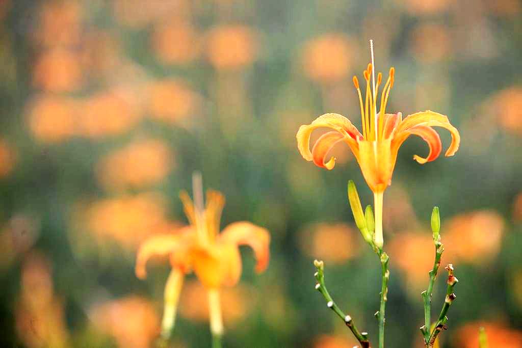 到太麻里的金針山慢活樂遊 (圖片來源:台東觀光旅遊網)