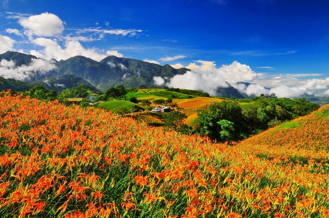▲赤科山今年的留花面積約45公頃,是全台灣最大片的金針花海。花蓮縣政府提供