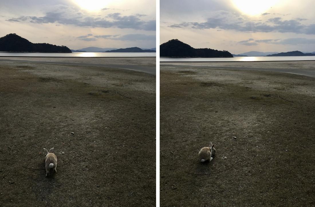 和兔兔一起看海~