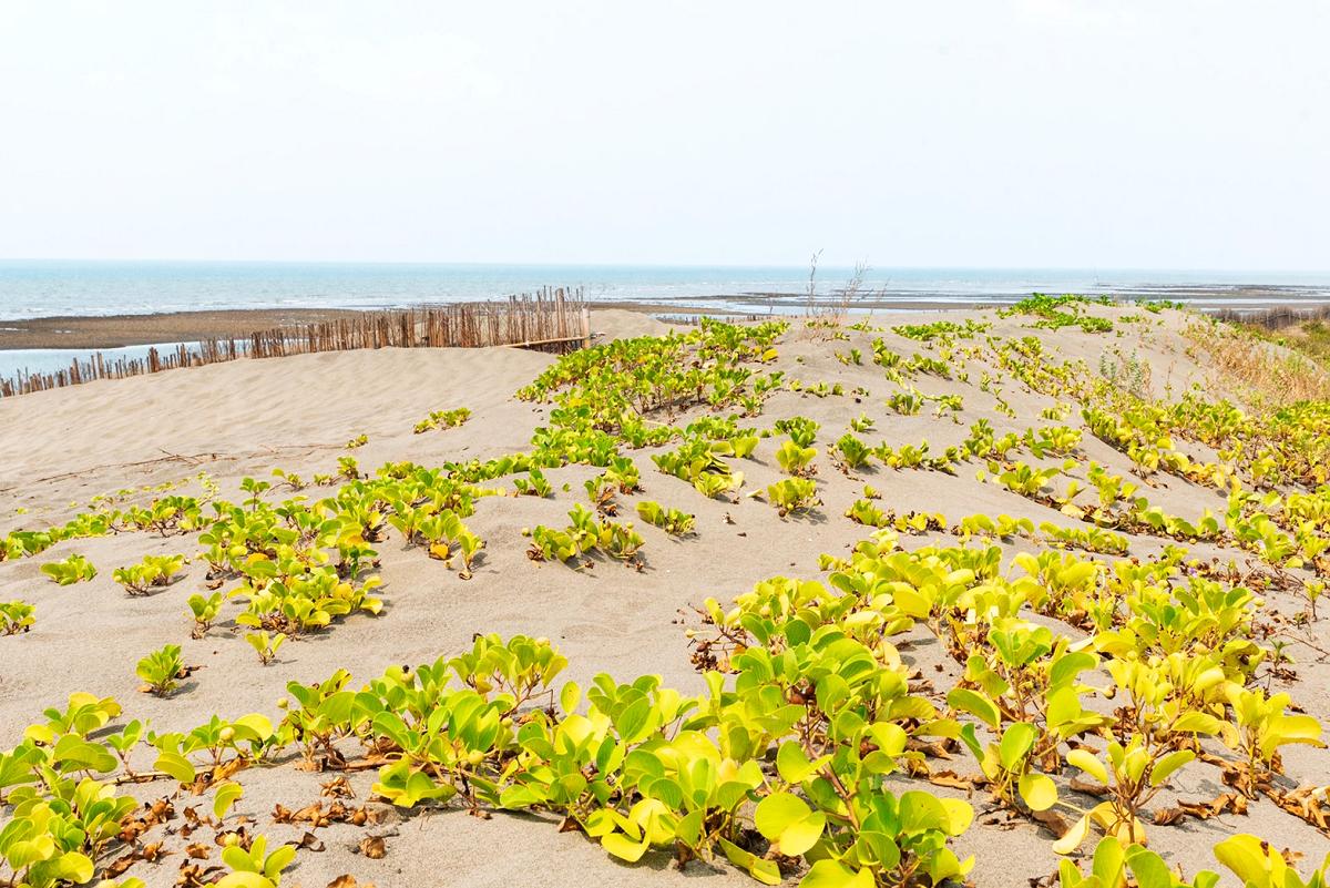 豐富的植物生態 (圖片來源:桃園市政府)