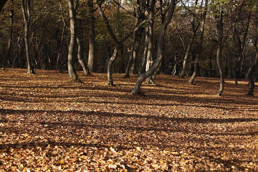 荷亞森林 (Photo by Cristian Bortes, License: CC BY 2.0, 圖片來源www.flickr.com/photos/bortescristian/8155407983)