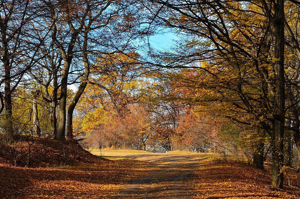 荷亞森林 (Photo by Miclaus George, License: CC BY-SA 3.0, 圖片來源commons.wikimedia.org/wiki/File:Hoia_toamna-Hoia_Forest_autumn_2012_-_panoramio.jpg)