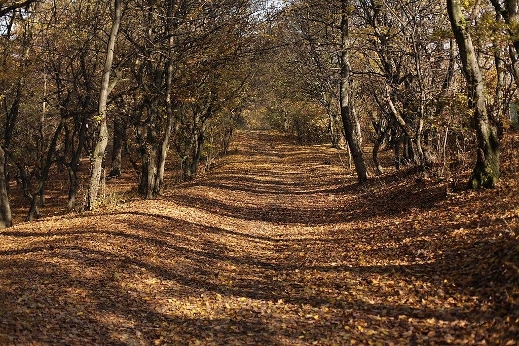 荷亞森林 (Photo by Cristian Bortes, License: CC BY 2.0, 圖片來源www.flickr.com/photos/bortescristian/8155448428)