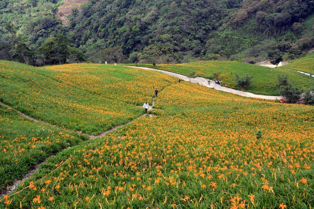為了方便遊客遊覽金針山,規劃3條登山步道。圖/台東觀光旅遊網