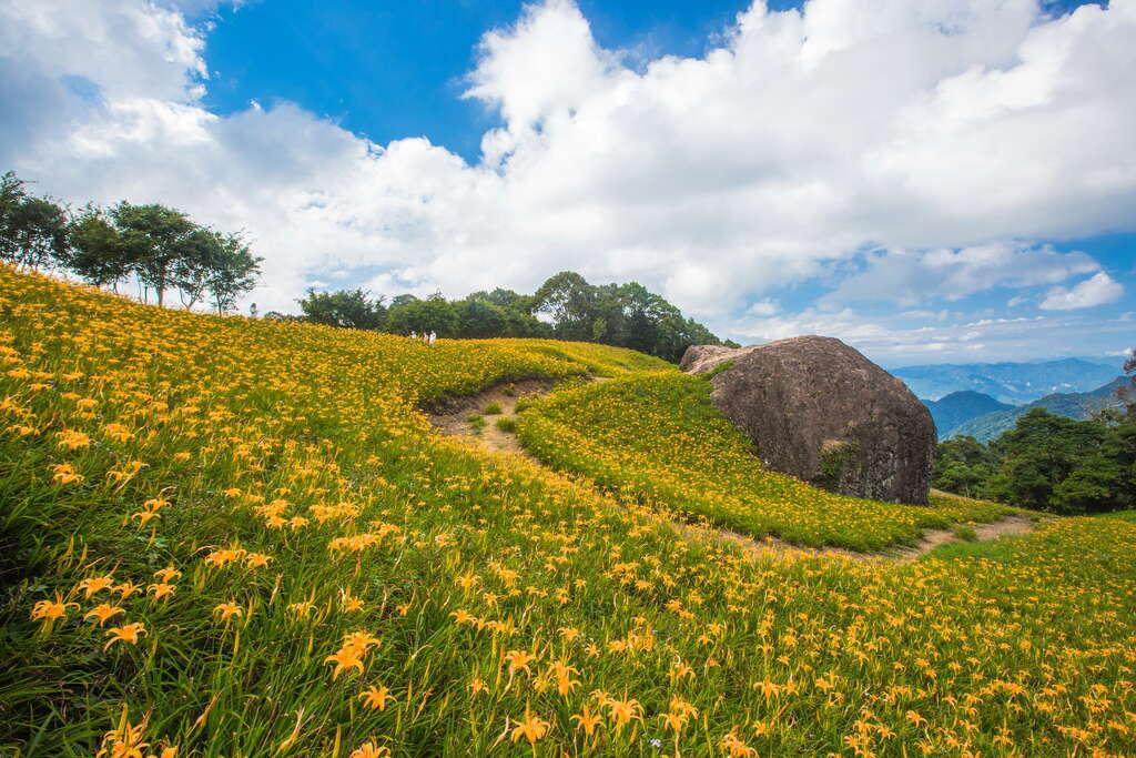 赤柯三景其中之一是屹立不搖的千噸石龜,隱身凹谷與花叢間。圖/花東縱谷風景區