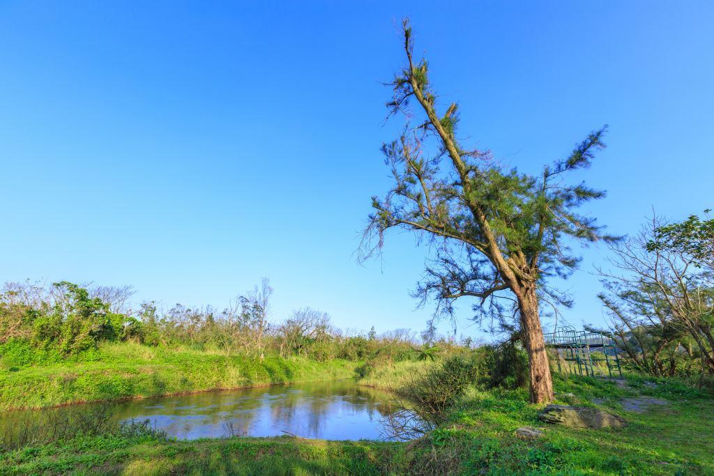 無尾港為沼澤溼地,1993年成為全台第一個水鳥保護區。圖/蘇澳觀光旅遊網