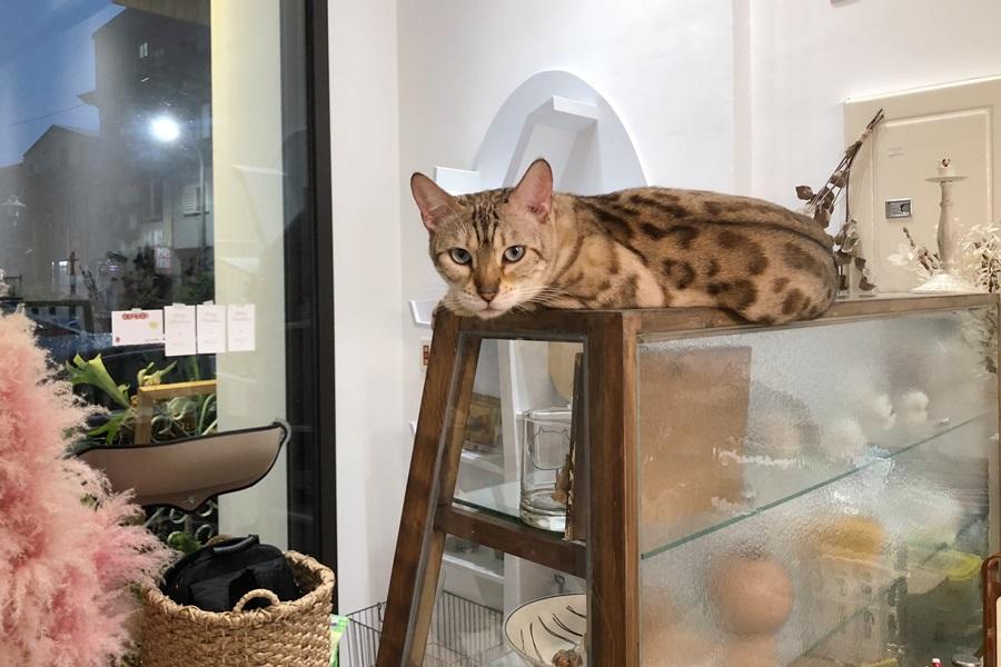 圖片提供/貓的生活提案