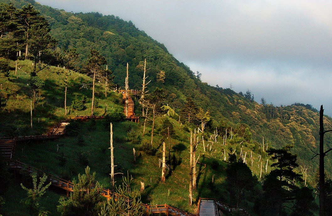 觀霧國家森林遊樂區經常雲霧瀰漫,而有「雲的故鄉」之稱。圖/觀光局