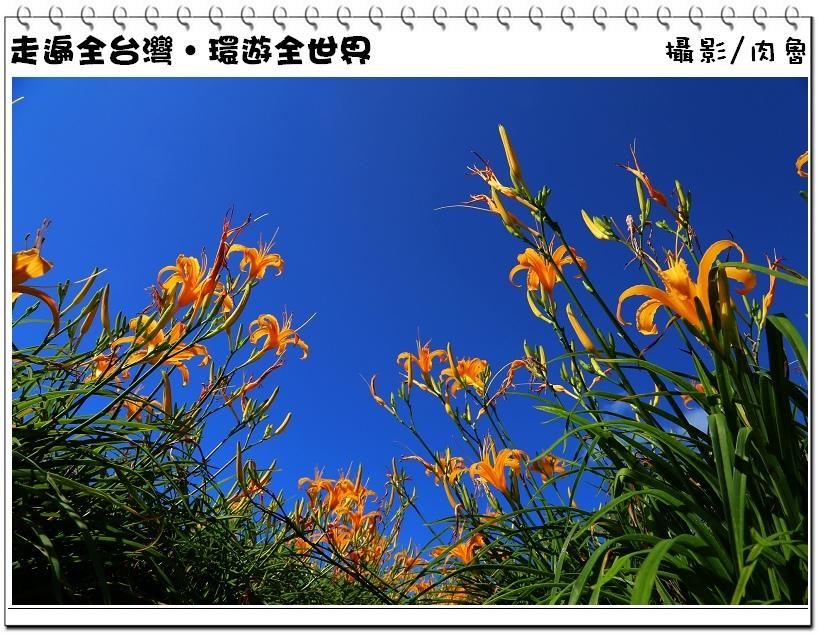 花蓮赤柯山金針花海