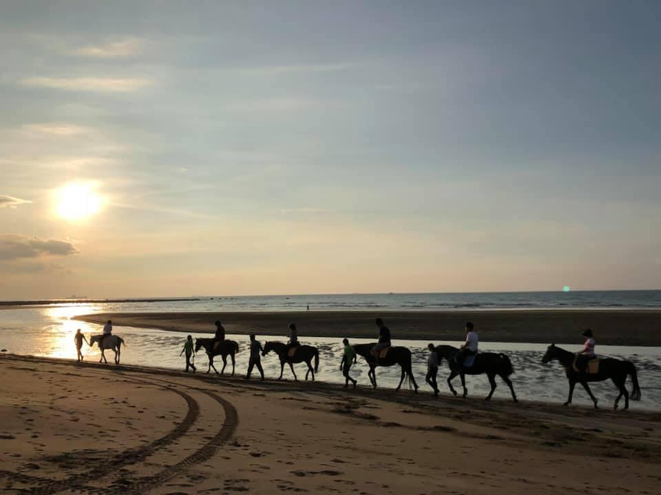 綠野馬術文創園區設立於1986年,位於沙崙海灘旁。圖/綠野馬術文創園區臉書粉絲專頁