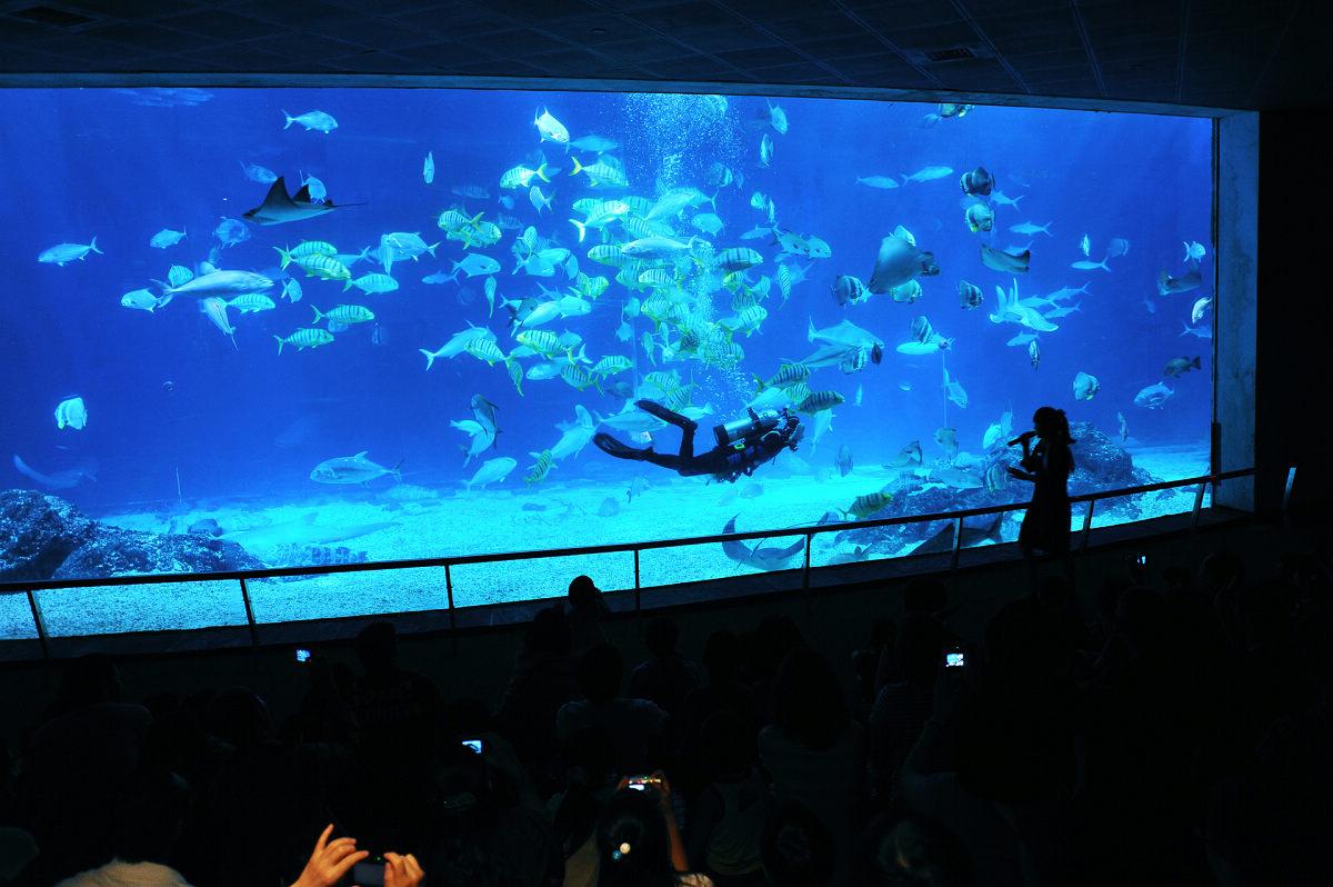 大洋池 (圖片來源:國立海洋生物博物館)