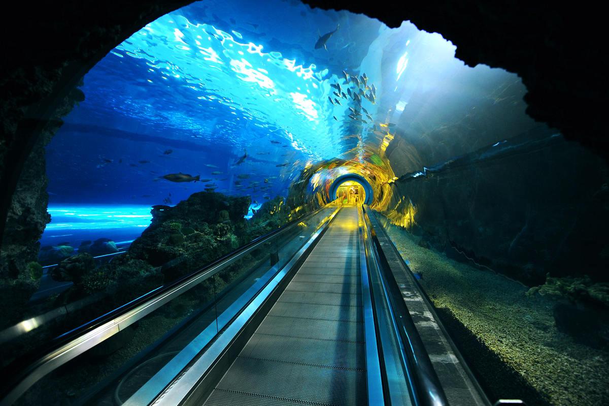 海底隧道 (圖片來源:國立海洋生物博物館)