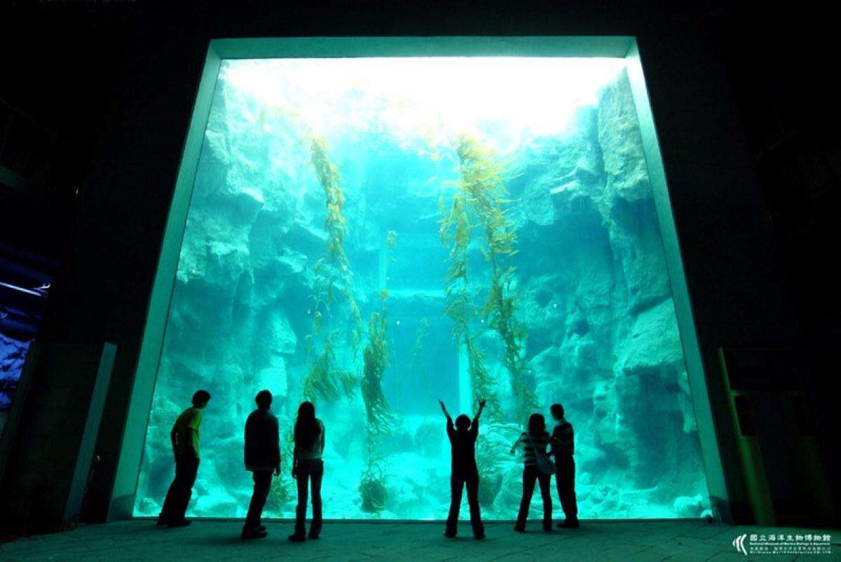 海藻森林 (圖片來源:國立海洋生物博物館)