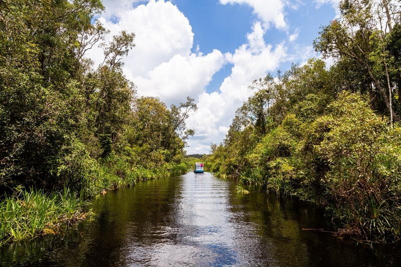 圖/加里曼丹雨林世界非常豐富,深入感受大自然之美。