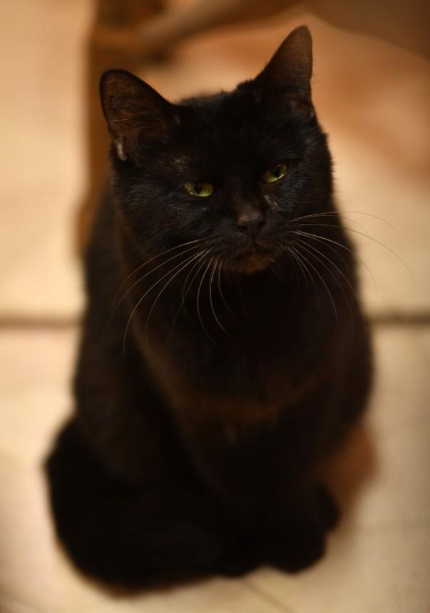 貓咪知道但是貓咪不說