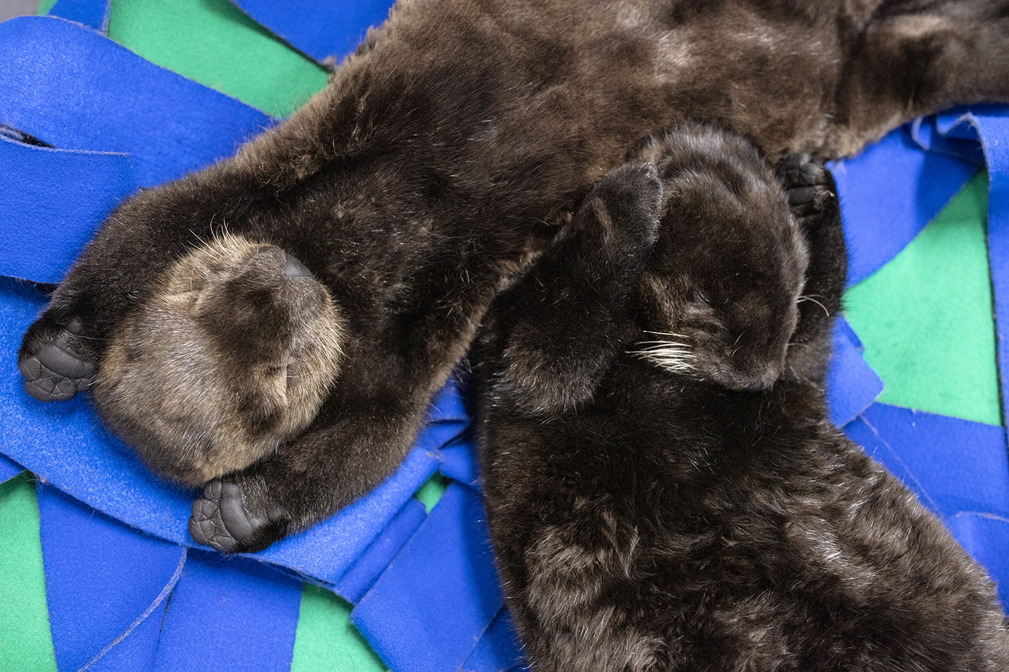PHOTOS: Rescued sea otter pups being named in a digital contest
