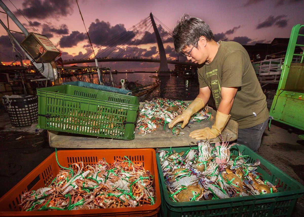 夜燈初上,捕蟹漁船剛進港,需要馬上分級處理,交由盤商銷售,圖中漁民帶著手套為萬里蟹分類(花蟹及三點蟹) (圖片來源:新北市政府)