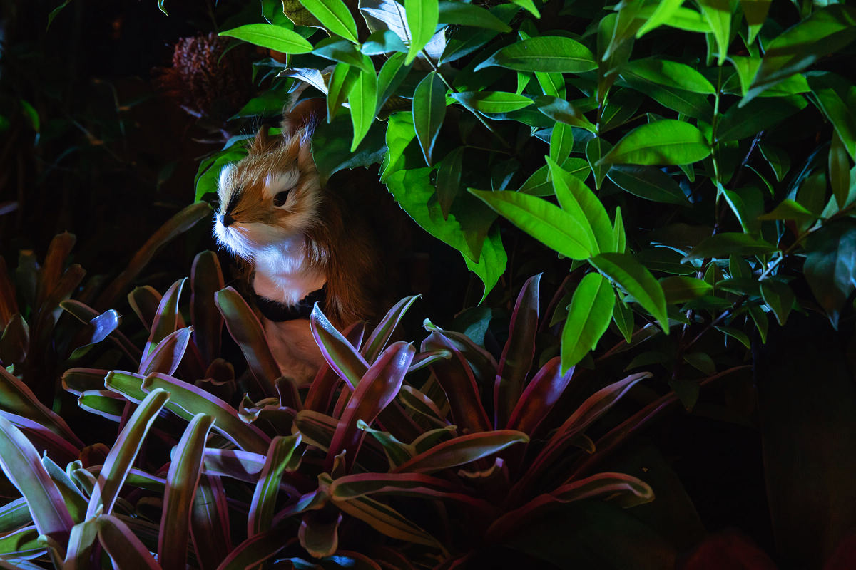 珍稀野生動物(圖片來源:BELLAVITA)