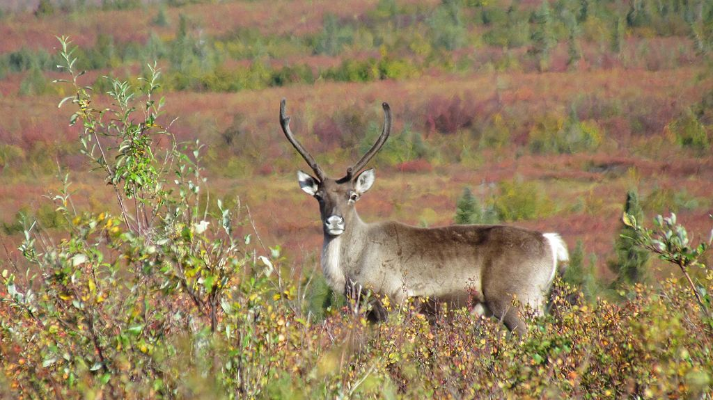 科伯克谷國家公園 (Photo by Western Arctic National Parklands, License: CC BY 2.0, 圖片來源www.flickr.com/photos/nps_wear/8454060175)