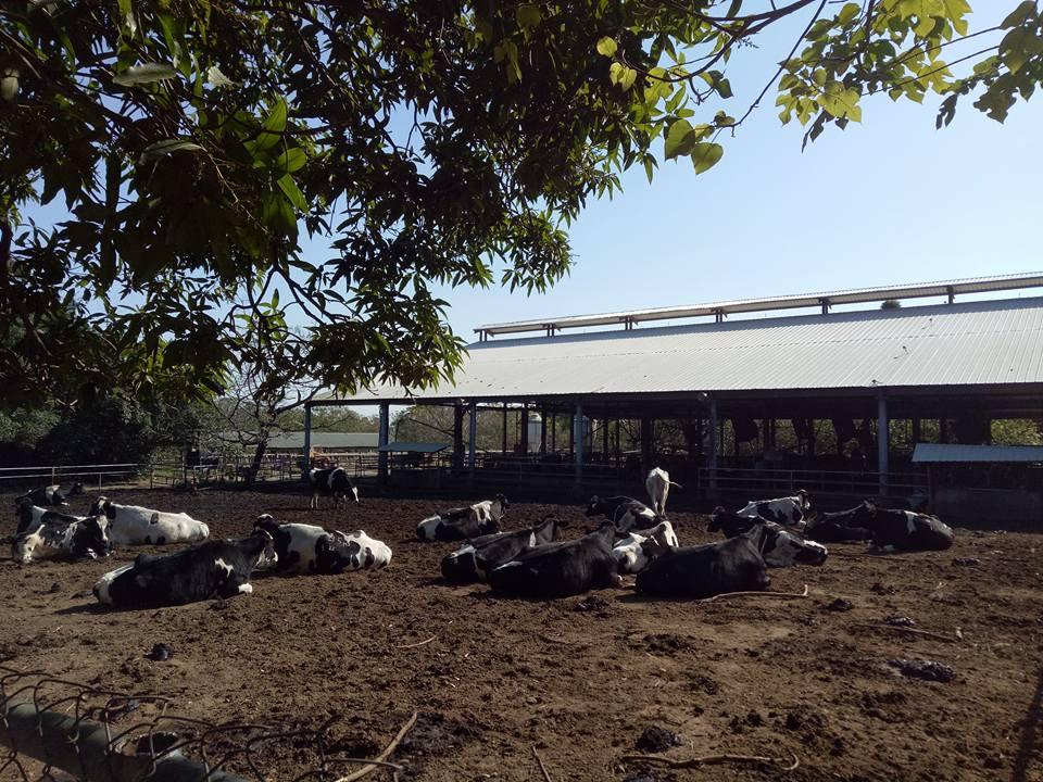 東海實習農牧場總面積約50公頃,結合教學、研究與實習功能。圖/東海乳品小棧臉書粉絲專頁