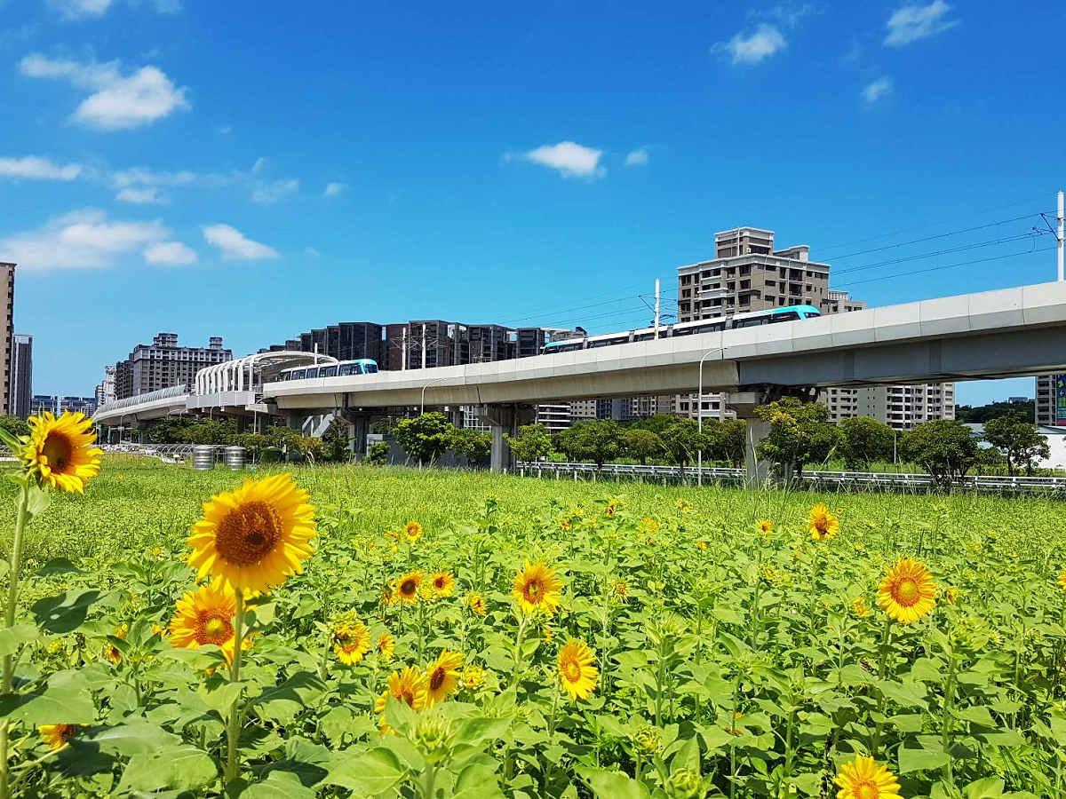 千朵向日葵綻放盛況(圖片來源:新北市政府)
