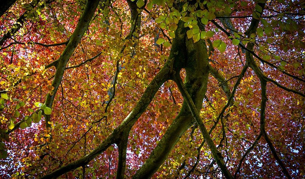 愛丁堡 (Photo by Gary Campbell-Hall from Edinburgh, UK, License: CC BY 2.0, 圖片來源www.flickr.com/photos/garyullah/42237665721)