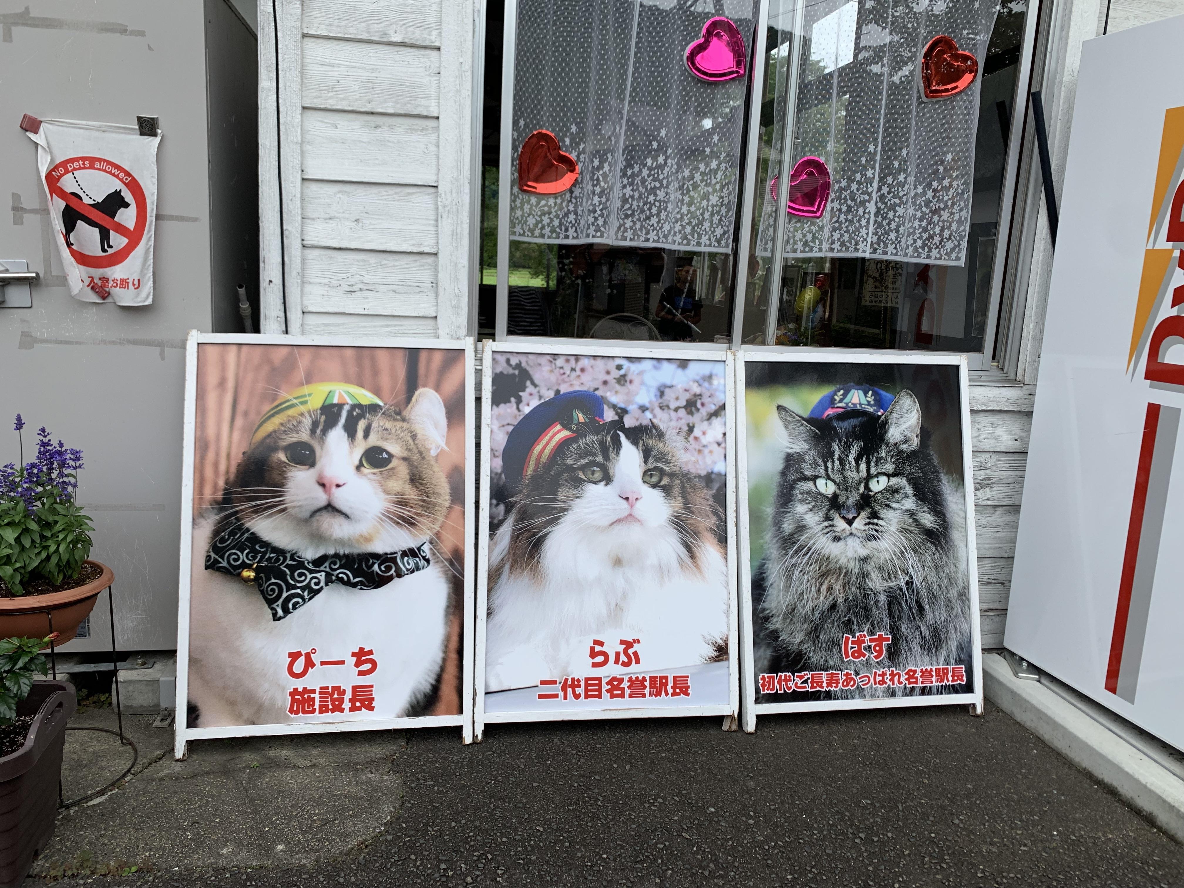 蘆之牧溫泉站的貓站長相當吸睛。