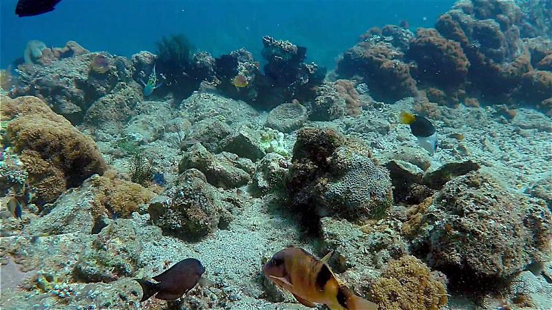 ▲富國島的海底世界多采多姿(圖/品冠旅遊)