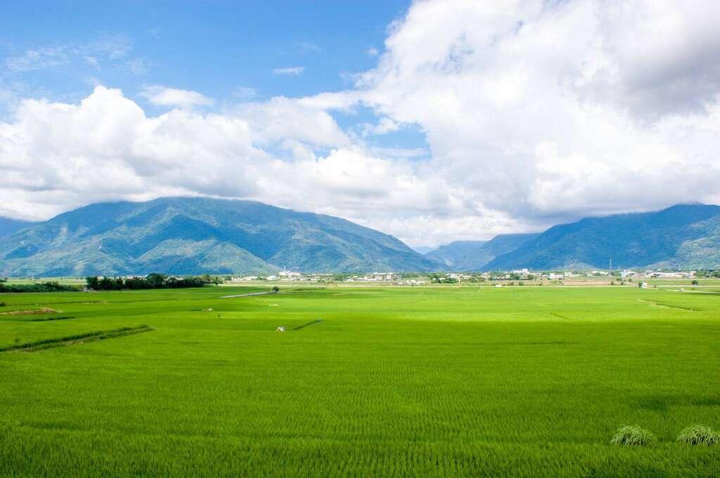 池上與關山以稻米飄香全台,步入秋收時節,或黃或綠的稻浪搭配遠方巍峨山巒與飄渺雲霧,形成一幅天然山水畫。圖/花東縱谷國家風景區
