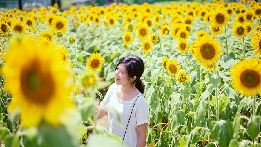 向日葵與掃帚草的王國