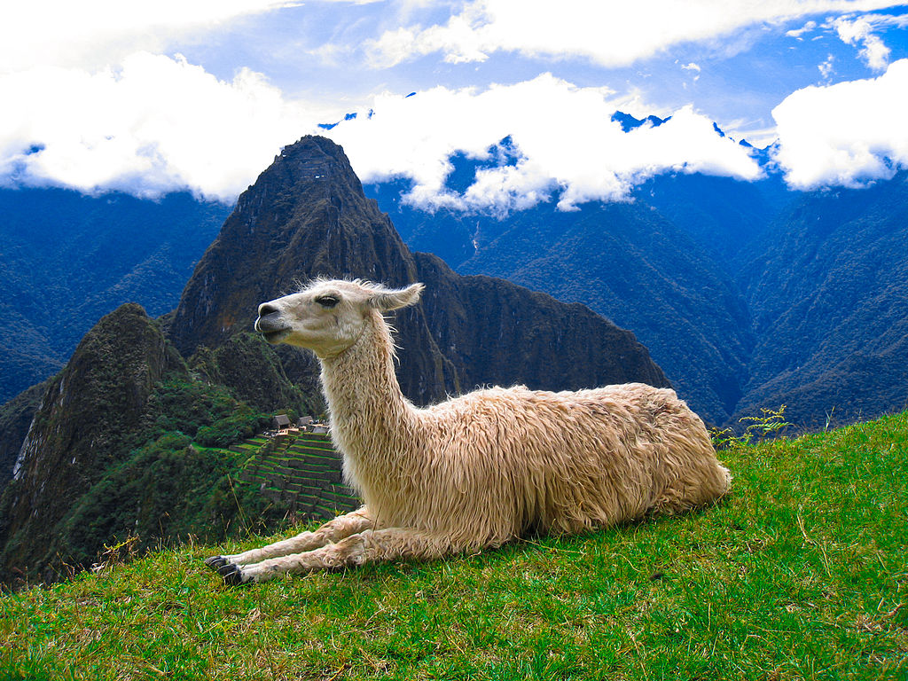 駱馬和馬丘比丘 (Photo by freestock.ca, License: CC BY-SA 3.0, 圖片來源freestock.ca/animals_insects_g29-machu_picchu_llama_p919.html)