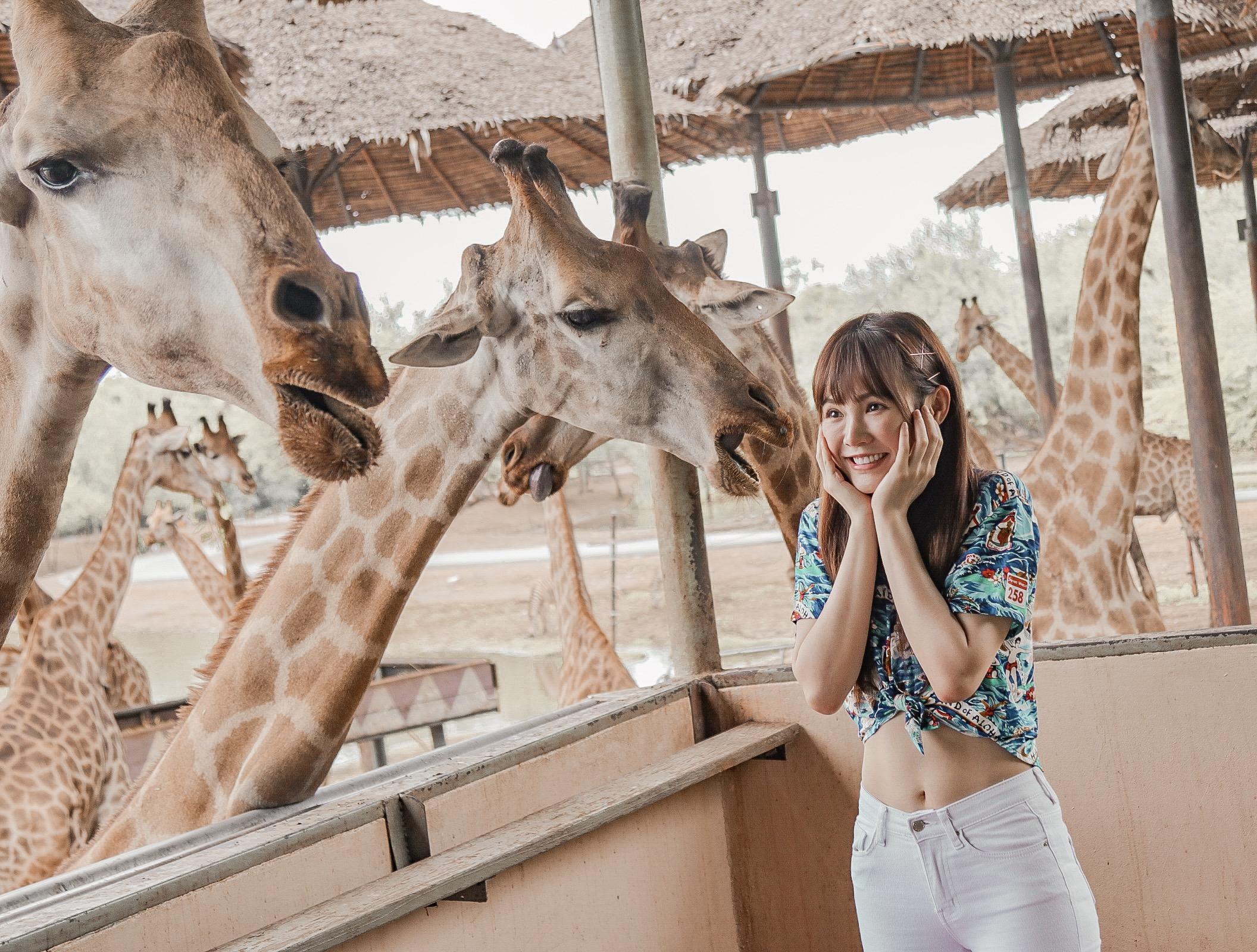▲泰國動物園的長頸鹿可以摸也可以餵,讓吳心緹和友人待了一整天。