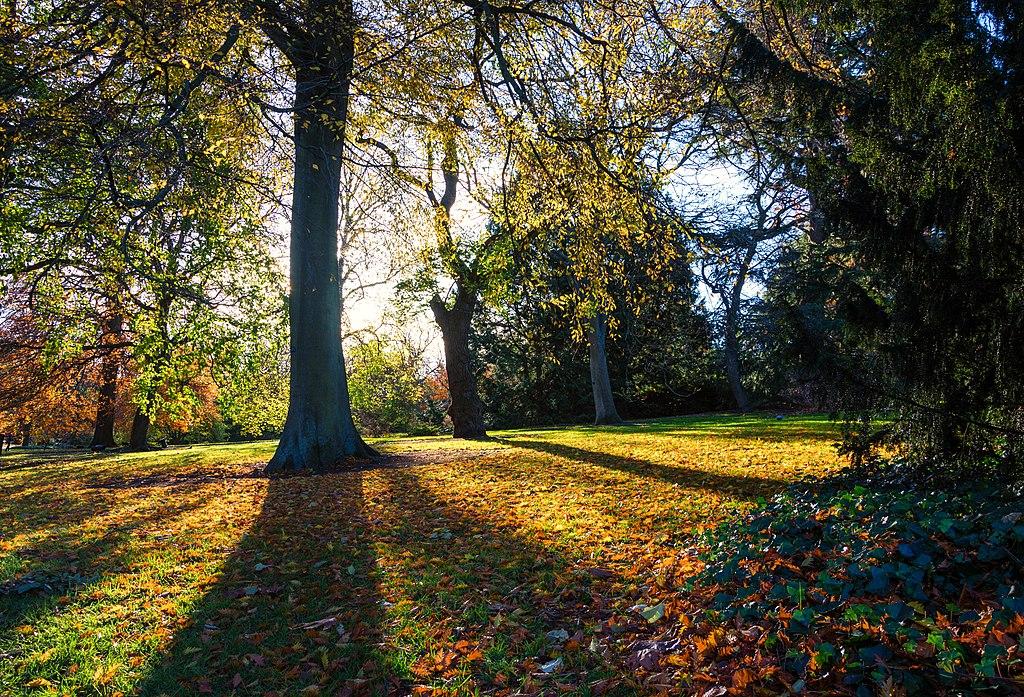 皇家植物園 (Photo by Gary Campbell-Hall from Edinburgh, UK, License: CC BY 2.0, 圖片來源www.flickr.com/photos/garyullah/39369698954)