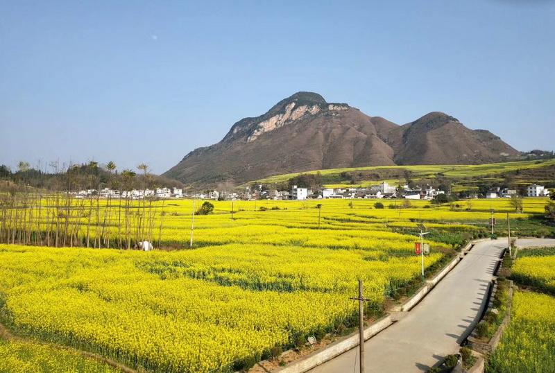 圖/貴州黃金花海