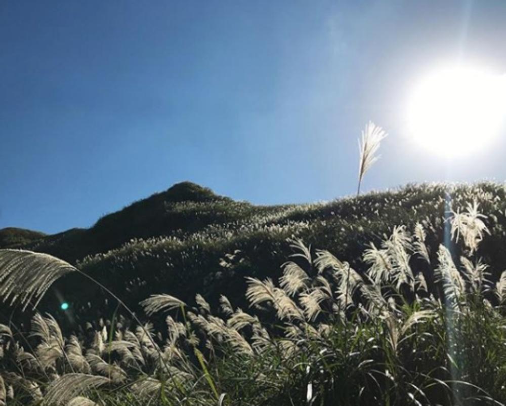 天山美色,還有芒草相伴。