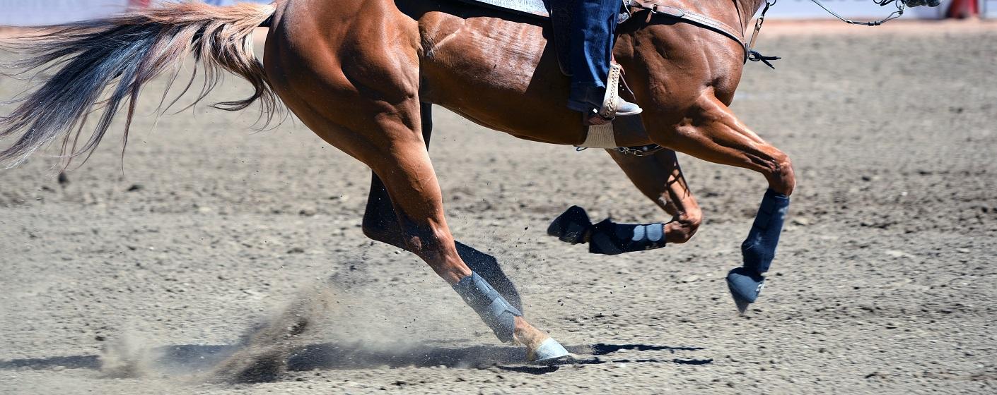 ▲全球最大牛仔盛會就在每年7月的卡加利牛仔節(圖/shutterstock.com)