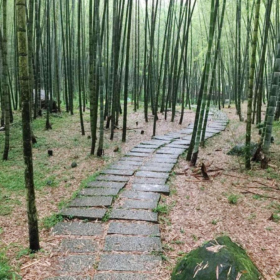 (圖片來源:南投觀光旅遊網)