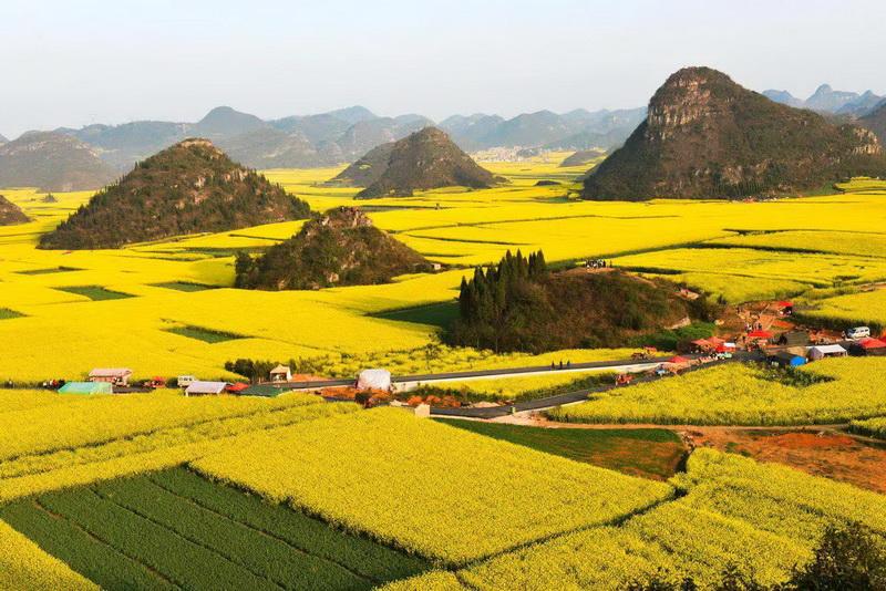 圖/來貴州旅遊就要到羅平金雞嶺、牛街梯田欣賞季節限定最壯麗的黃金花海!