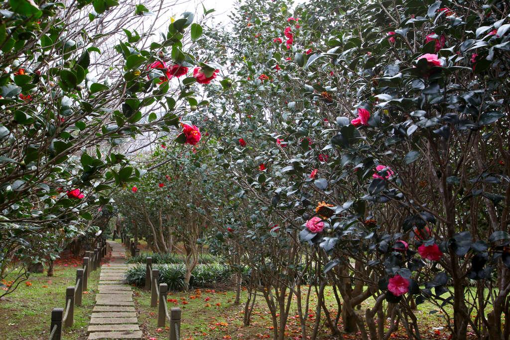 花卉試驗中心位於中國文化大學旁,有台北後花園之稱。圖/台北旅遊網