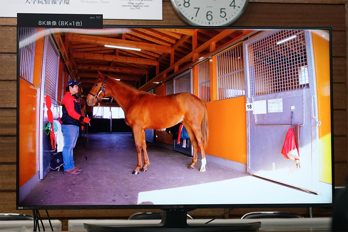競争馬5G実験